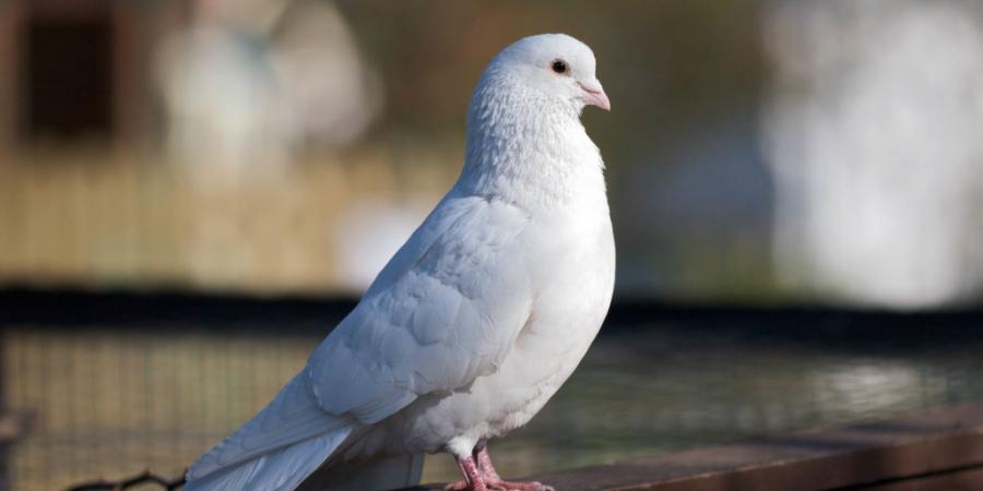 Птица залетела в дом (примета): голубь, ласточка, воробей, синица