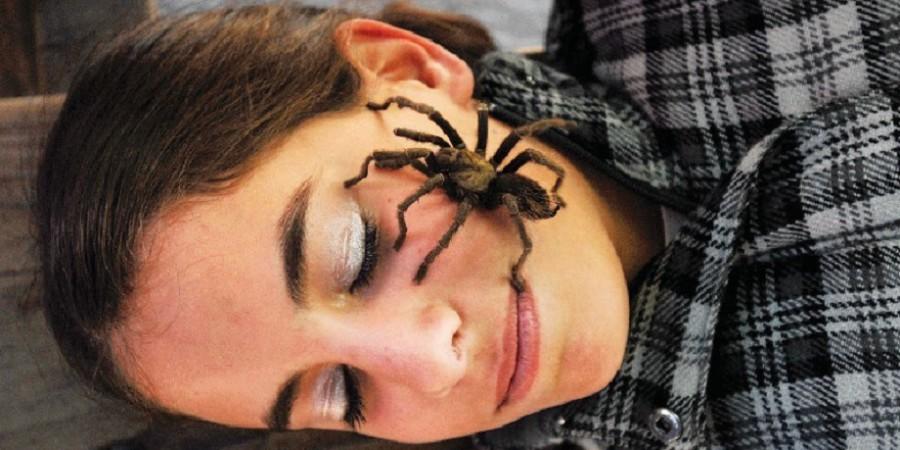 примета паук ползет по человеку