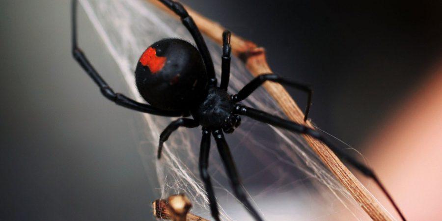 примета паук спускается вниз