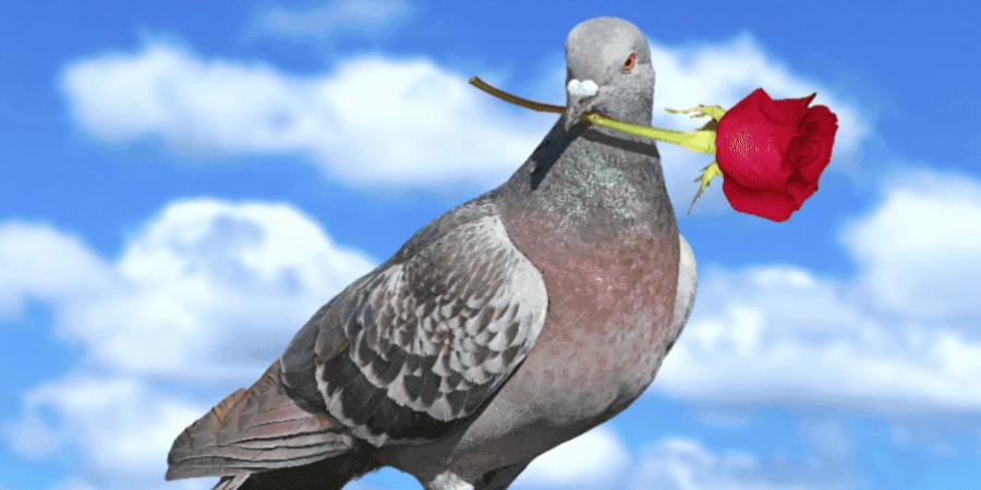 "примета ""если птица накакала"