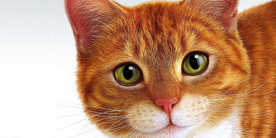 рыжий кот в доме — приметы