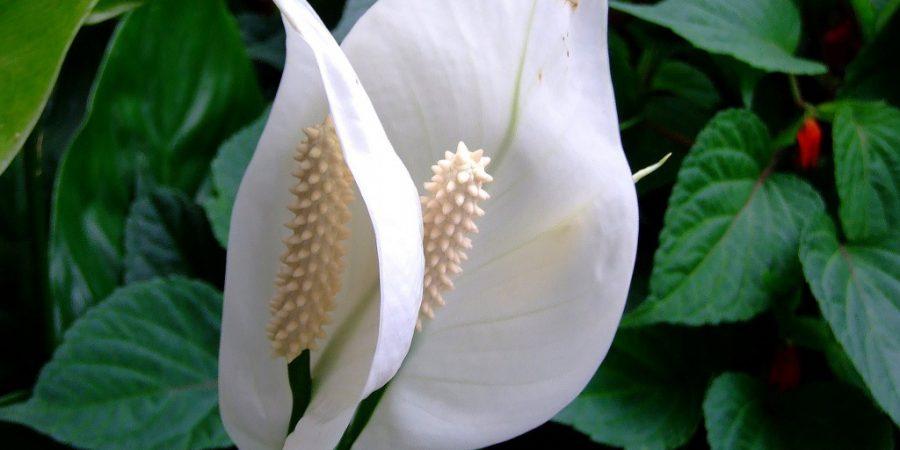 женское счастье цветок приметы